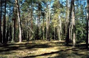 буковый лес их восемь видов на кубани
