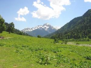 высокогорный луг, трех поясные луга