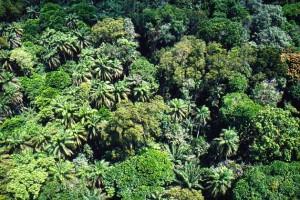 желтоземы и результат благотворного влияния на растительный мир