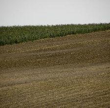 коричневые почвы, оправдывают свое название