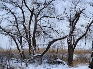 Кубань в январе, мало зимнего