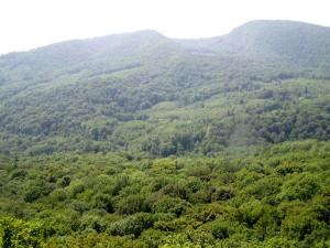 лес Кубани располагается в основном в горах
