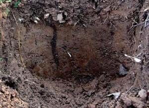 почвы низких гор серые лесные, мало изучены