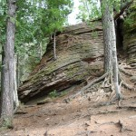 серые лесостепные почвы предгорные почвы