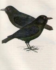 Птица ворон фото