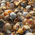 Курорты Кубани: Веселовка