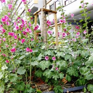 Садоводство на Кубани