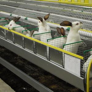 Kлетки для кроликов