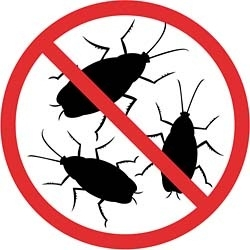 Травля насекомых в помещении и услуги специальных служб