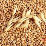 Покупка кормового зерна