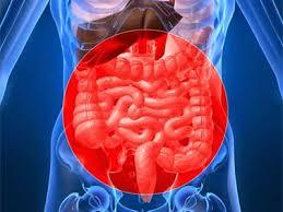 Восстановление дисбаланса кишечника