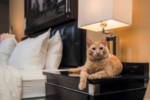 Преимущества отелей для кошек