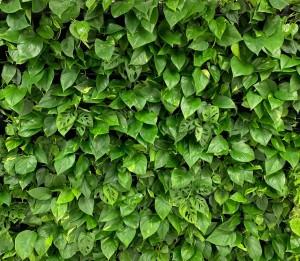 Вертикальное озеленение. Фитостены